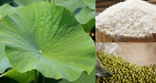 Reduce belly fat with dry lotus leaf, good for health 8